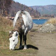 Trekking around Baikal lake 04