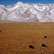 Tibet countryside 08