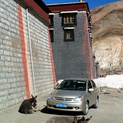 Tibet - donkeys in Sakya