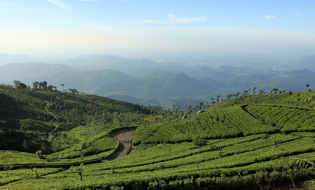 Haputale Sri Lanka  City pictures : Sri Lanka Haputale tea plantations 08