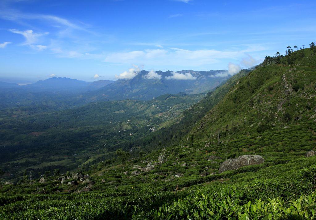 Haputale Sri Lanka  City new picture : Sri Lanka Haputale tea plantations 17