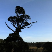 Sri Lanka - Horton Plains 001