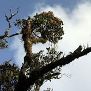 Sri Lanka - Horton Plains 015