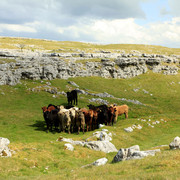 England - Yorkshire dales 013