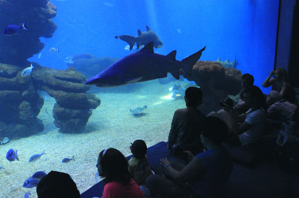 Mallorca - a shark tank in Palma Aquarium 01