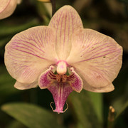 An orchid flower 02