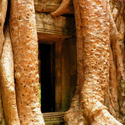 Cambodia - Ta Prohm Temple 01