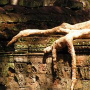 Cambodia - Ta Prohm Temple 02