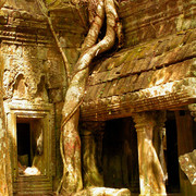 Cambodia - Ta Prohm Temple 04