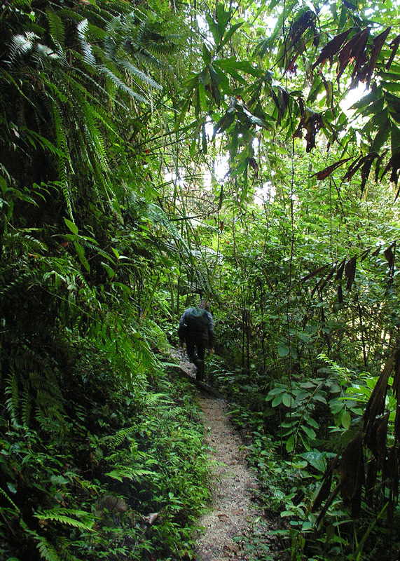 Malaysia - jungle trekking in Cameron Highlands 05
