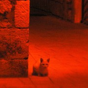 A cat in night streets
