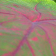 A detail of a leaf 03