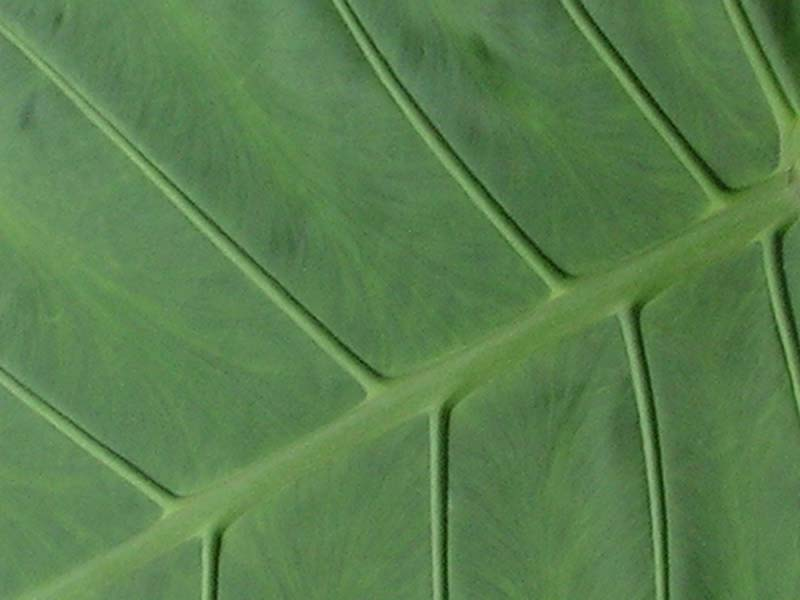 A detail of a leaf 02